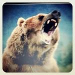 pesto à l'ail des ours